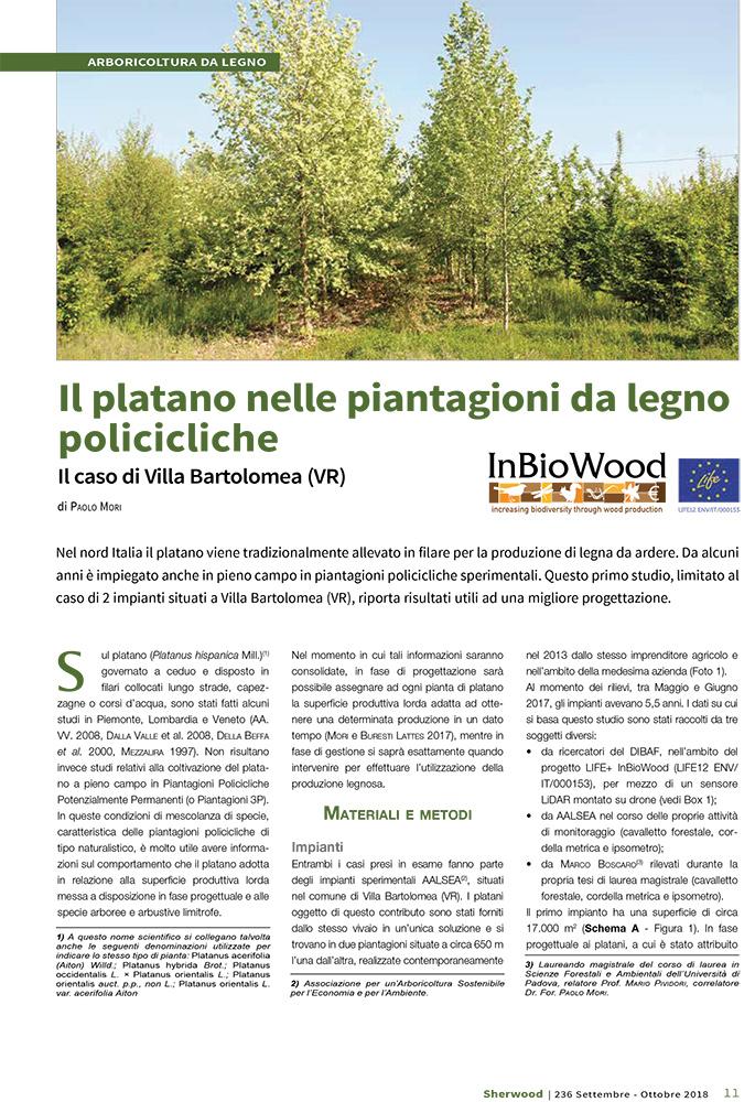 Il platano nelle piantagioni da legno policicliche – Il caso di Villa Bartolomea (VR)